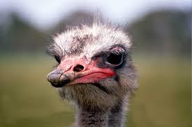 avestruz.png